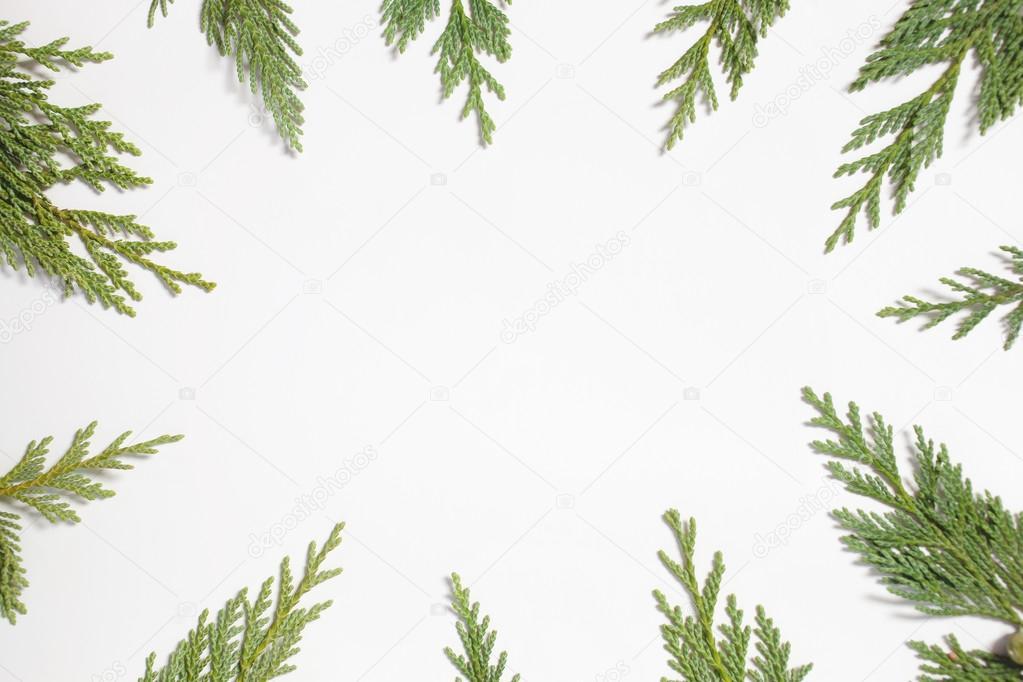 Frame with Japanese cypress (Chamaecyparis, coniferous tree ...