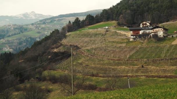 Vinice na jaře v Itálii, 4k