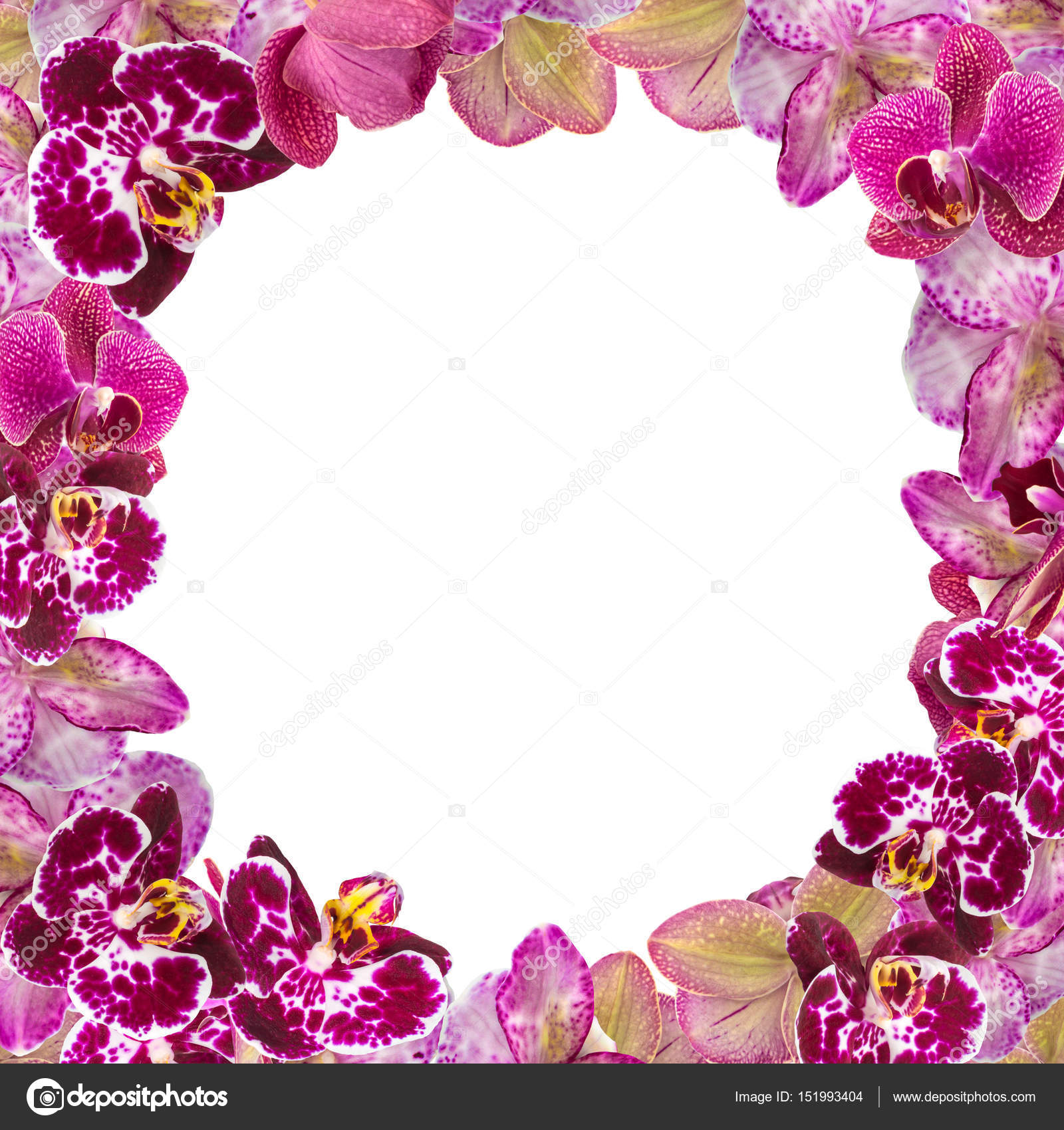 Beautiful Pink Orchids Border for Greeting Card or Lovely Flower ...