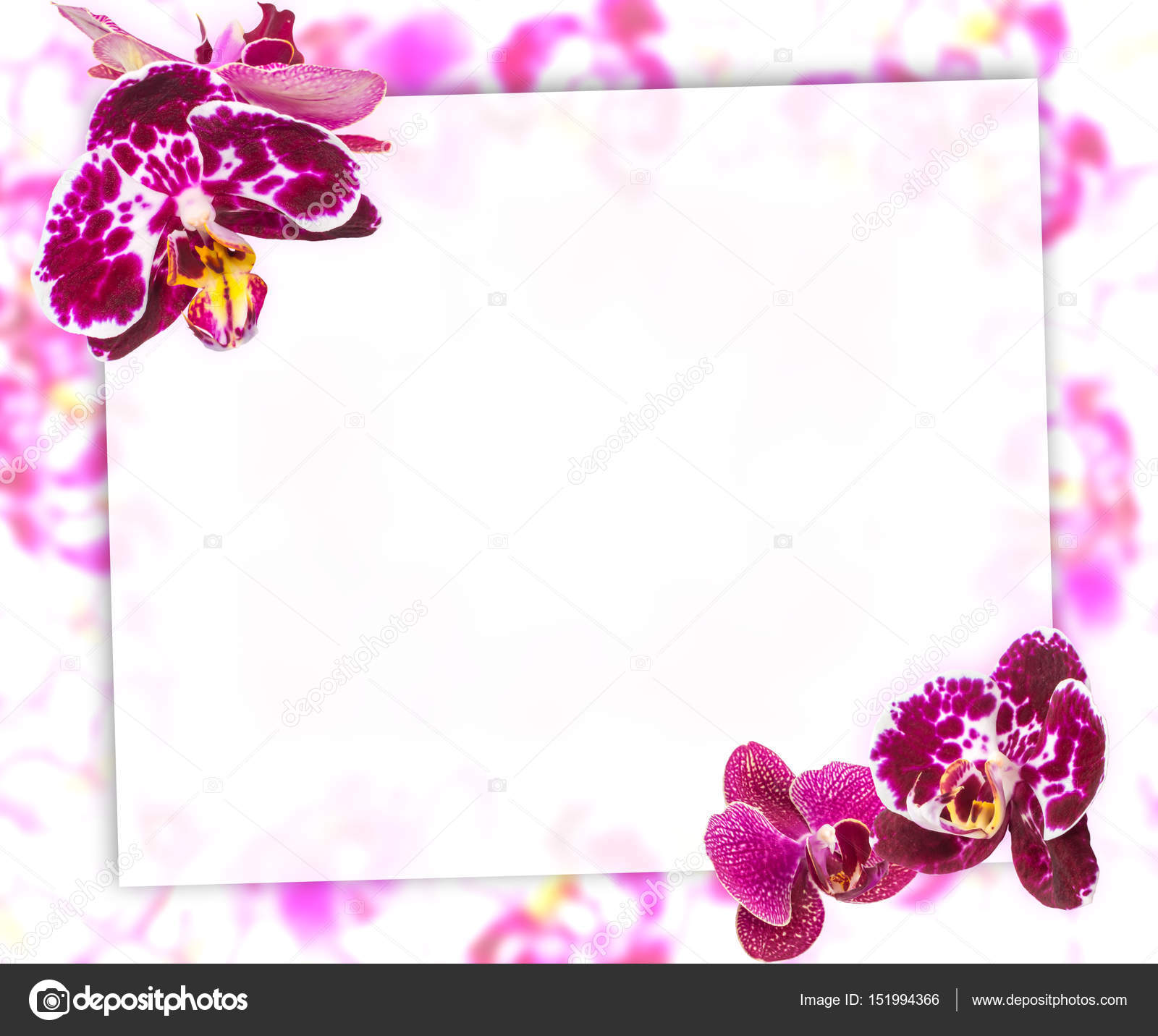 Beautiful pink orchids border for greeting card or lovely flower beautiful pink and violet orchids border for greeting card lovely flower frame with blank space for text photo by oksana6299956 kristyandbryce Choice Image
