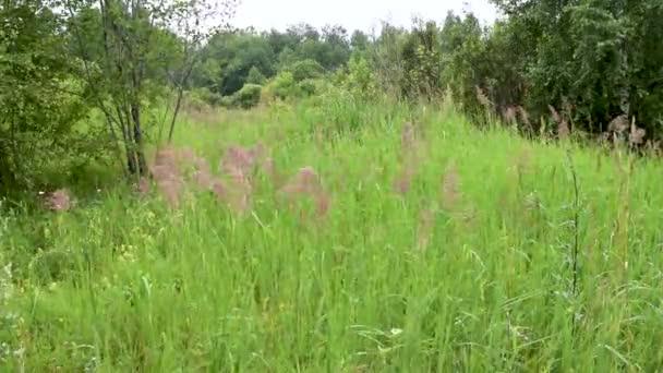 Jelenet a vad réten fű