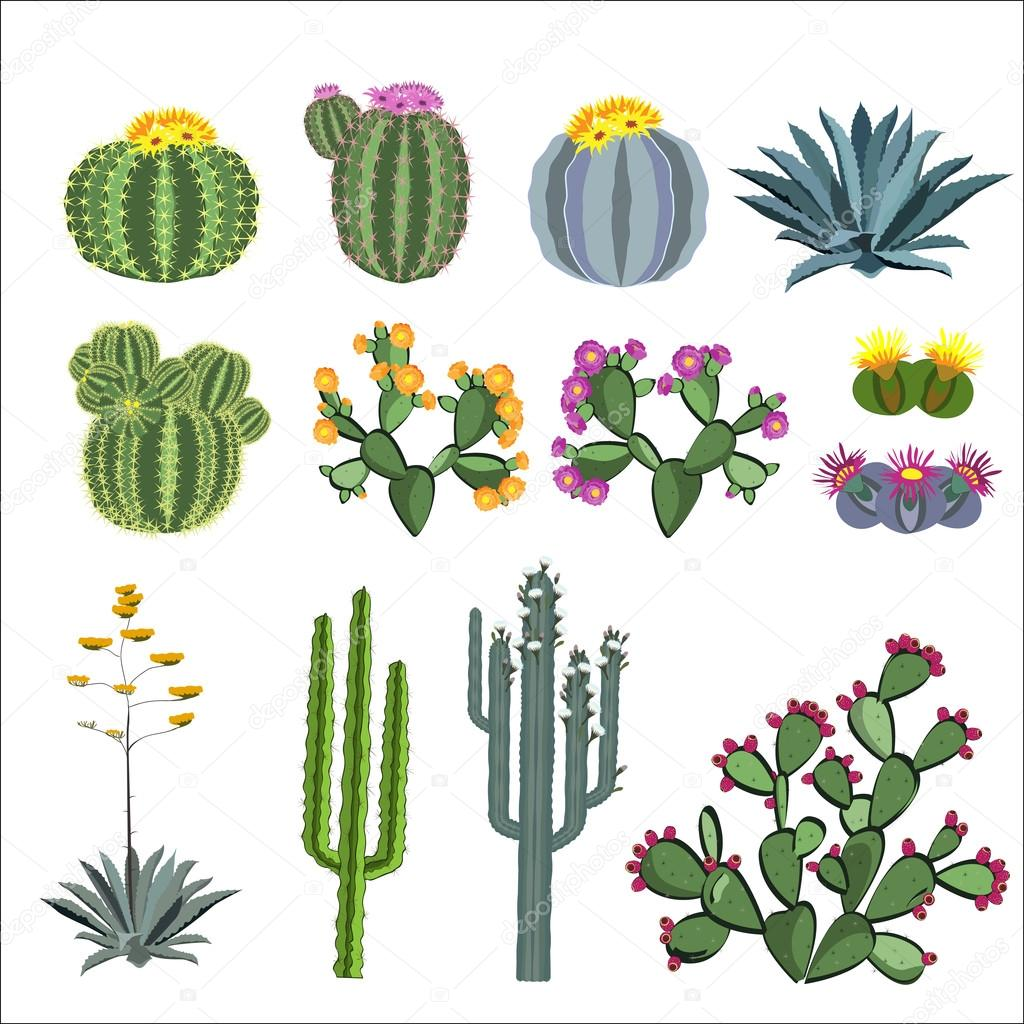 Cactus and succulent vector set.