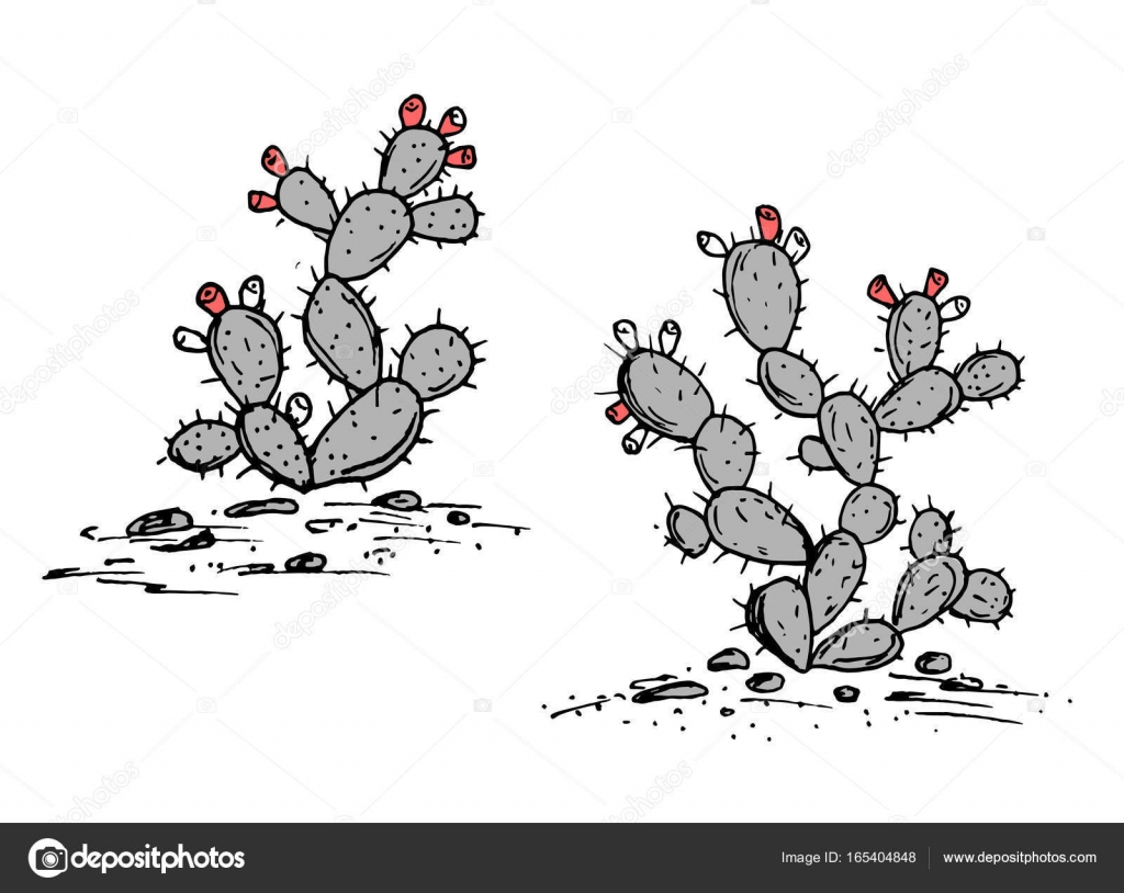 Prickly Pear vector sketch. Prickly pear cactus with ripe fruits ...