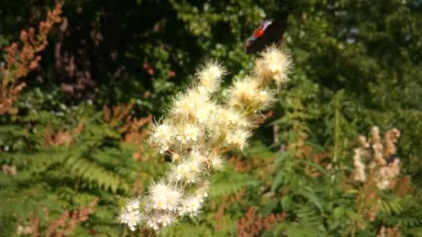 Schmetterlinge und Käfer fliegen auf Blumen