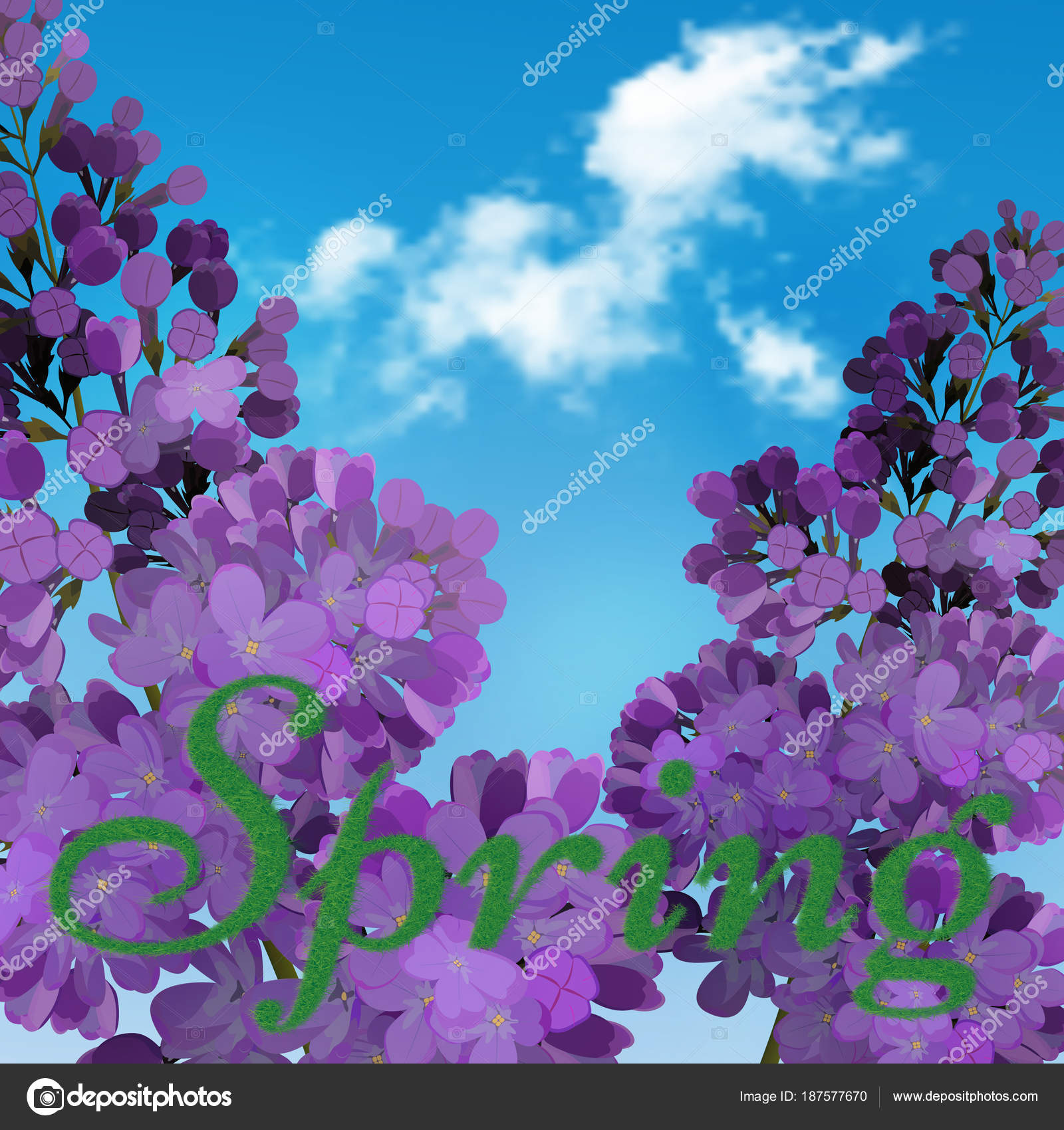 Blooming Violet Lilac Flowers Floral Background With Blue Sky