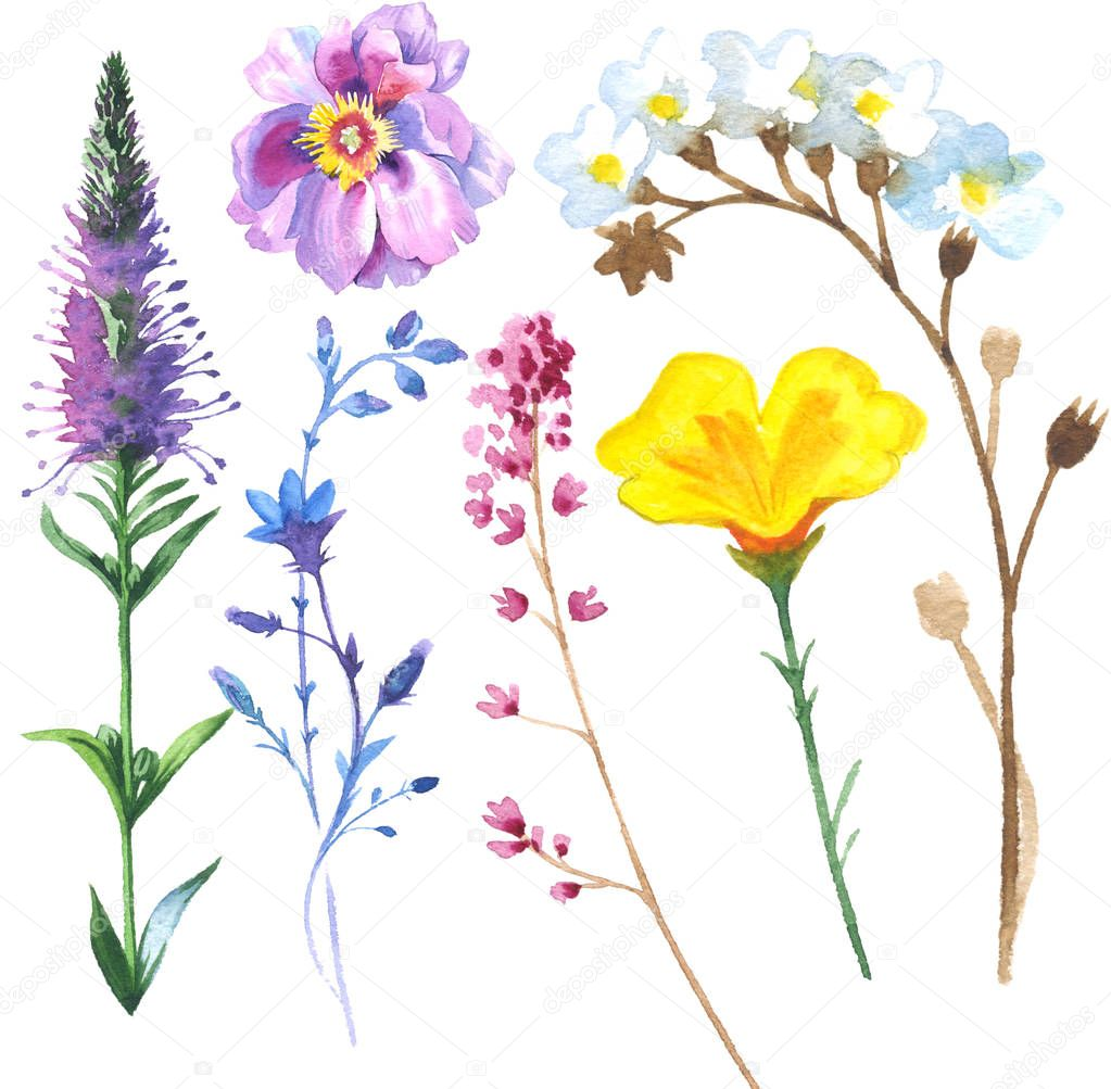Painted wildflower flowers set in a watercolor style.
