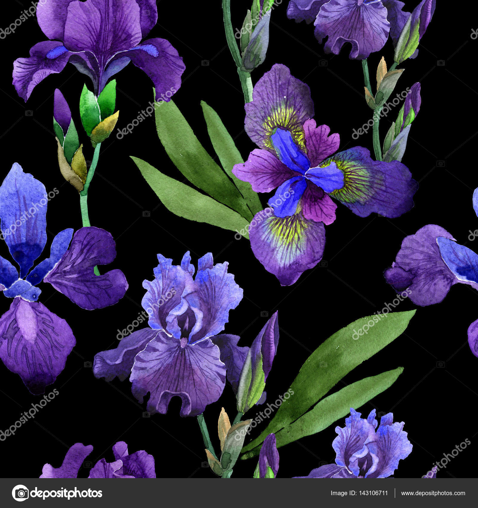 Wildflower Iris Flower Pattern In A Watercolor Style Isolated