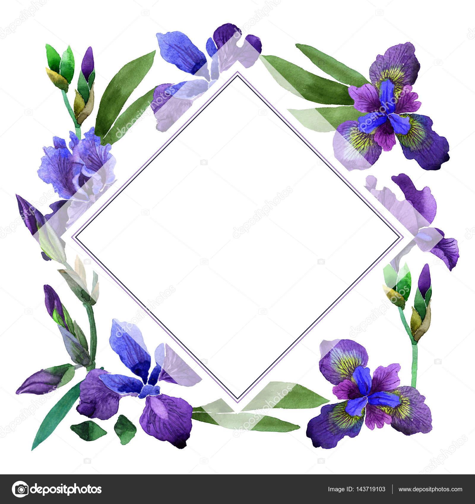 Imagenes Flores Moradas Y Nombres Marco De Flores De Iris Flores
