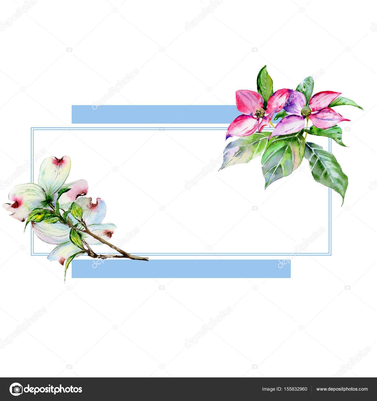 Wildflower dogwood flower frame in a watercolor style isolated wildflower dogwood flower frame in a watercolor style isolated stock photo izmirmasajfo