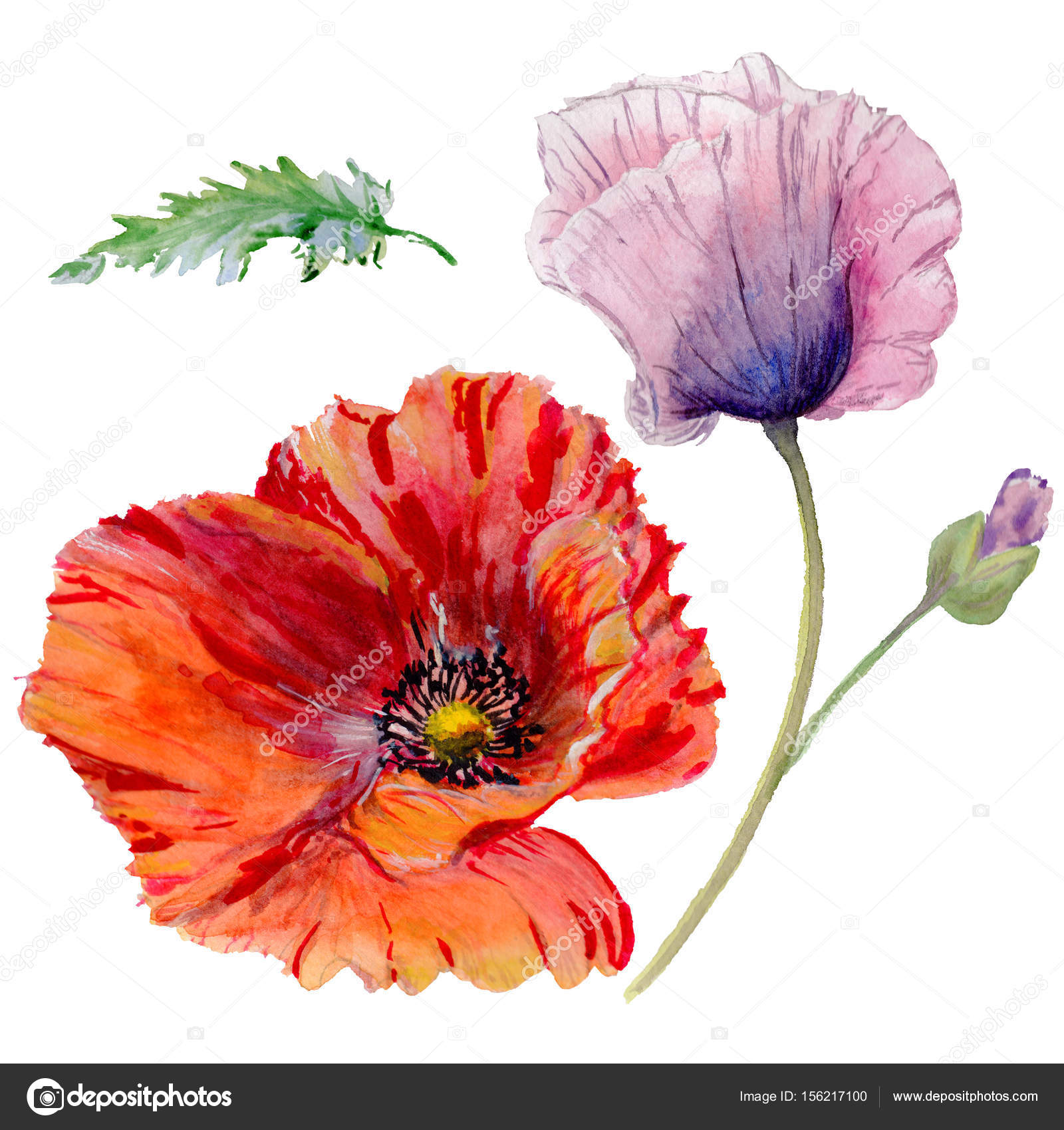 Wildflower Poppy Flower In A Watercolor Style Isolated Stock