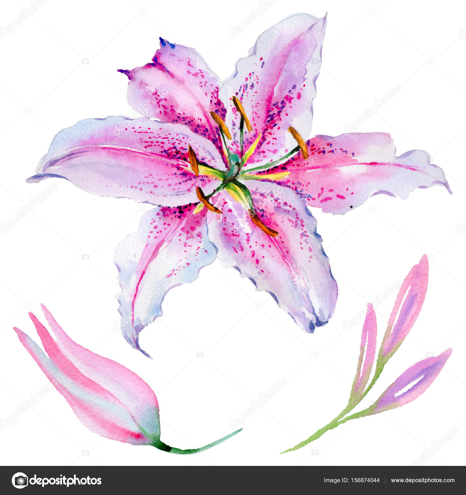 Wildflower lily flower in a watercolor style isolated stock photo wildflower lily flower in a watercolor style isolated stock photo izmirmasajfo