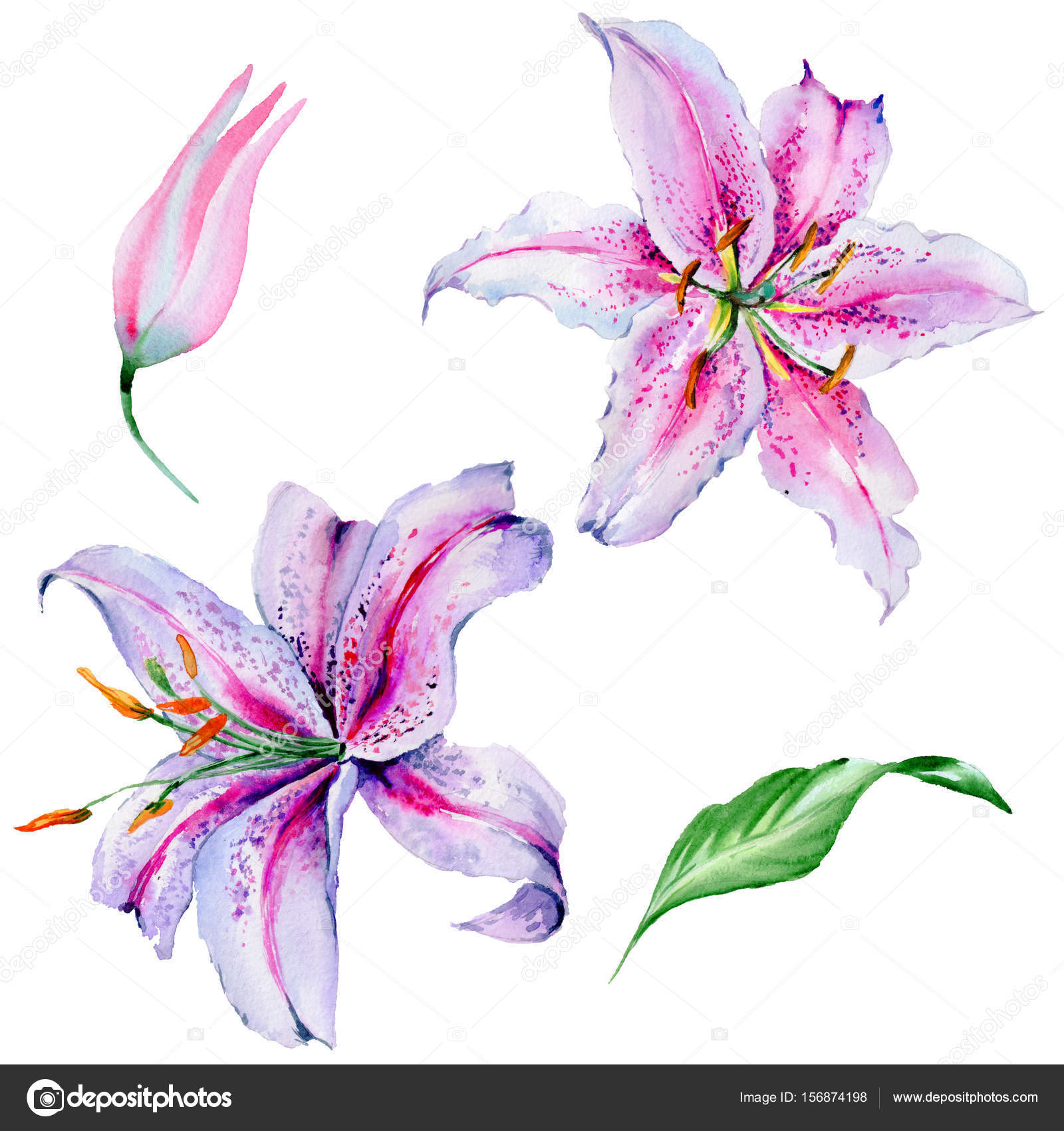 Wildflower lily flower in a watercolor style isolated stock photo wildflower lily flower in a watercolor style isolated stock photo izmirmasajfo Choice Image