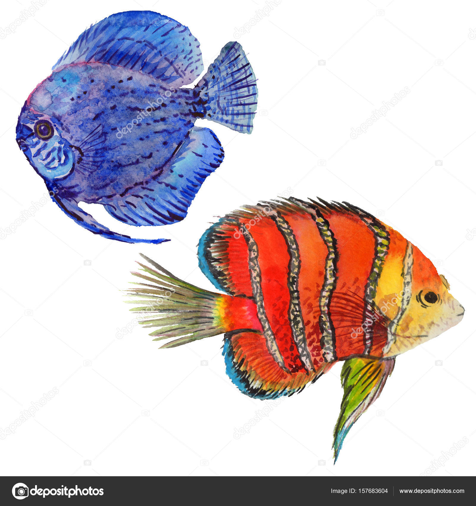 Watercolor aquatic underwater colorful tropical fish set. Red sea ...