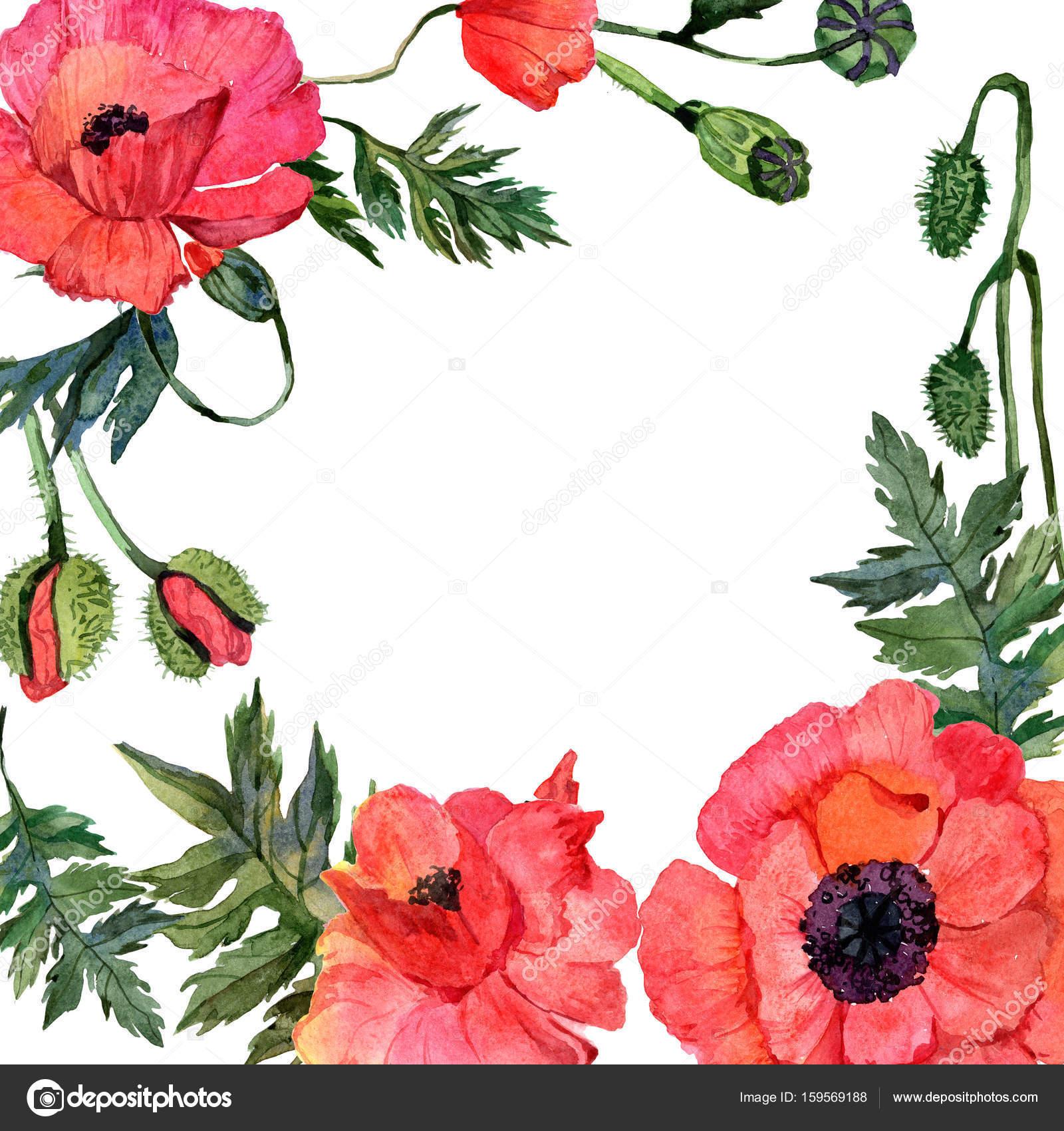 Marco de flor amapola de flores silvestres en un estilo acuarela ...