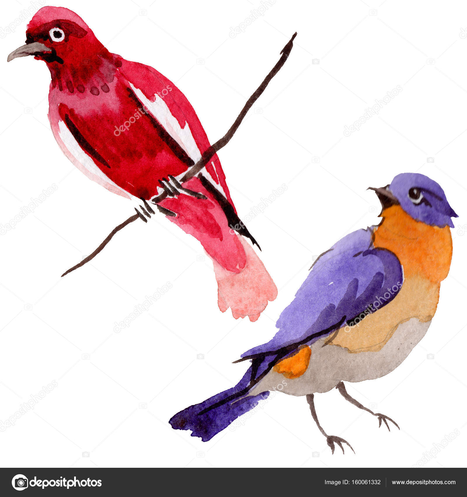 Niebo Ptaki Rajskie Przyrody Przez Stylu Przypominającym