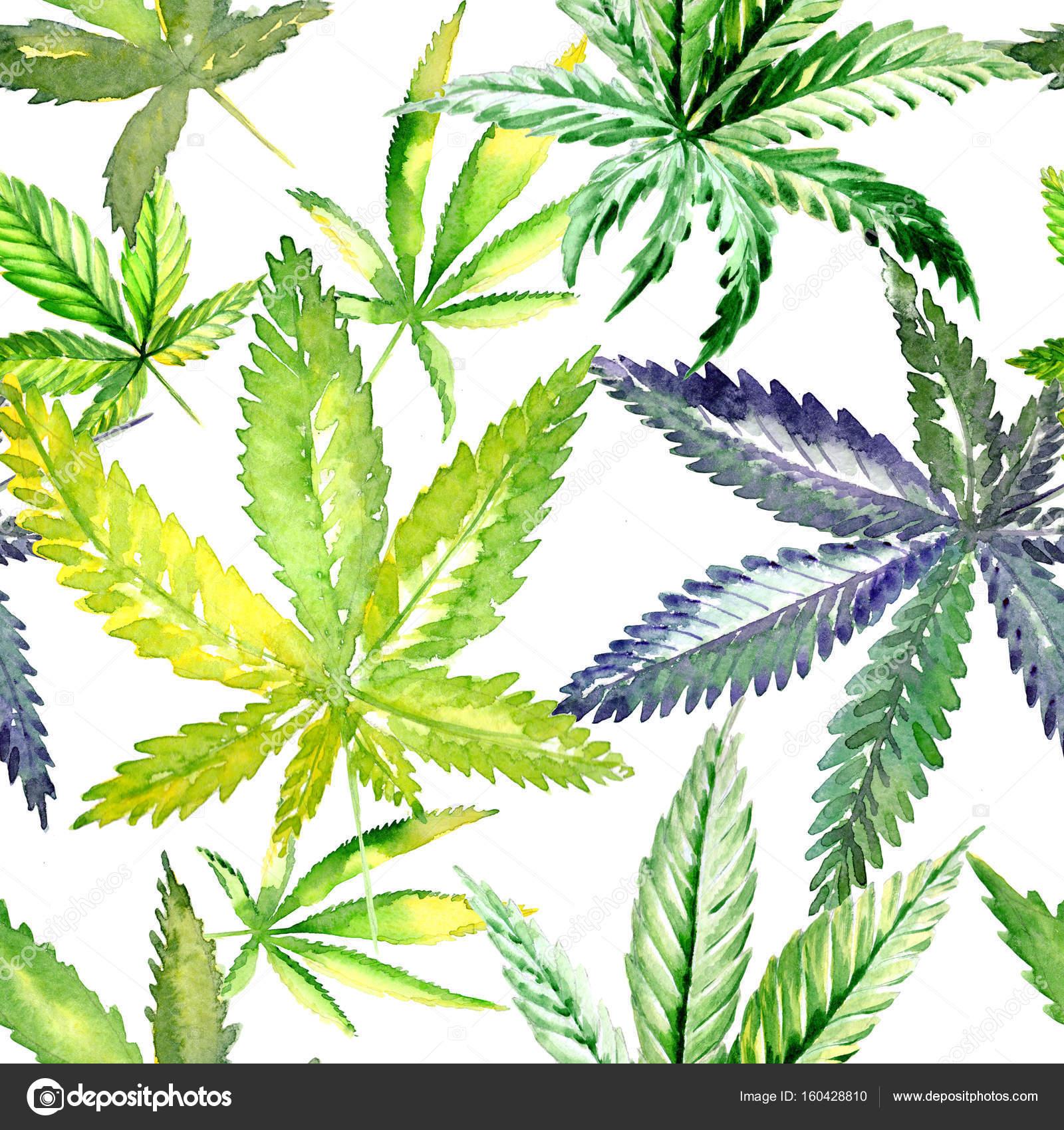 Motif De Fleurs De Cannabis De Fleurs Sauvages Dans Un Style