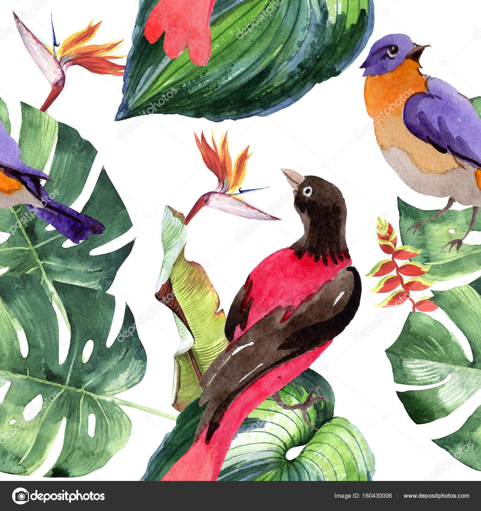 Niebo Ptaki Rajskie Wzór W Dzikich Przez Stylu