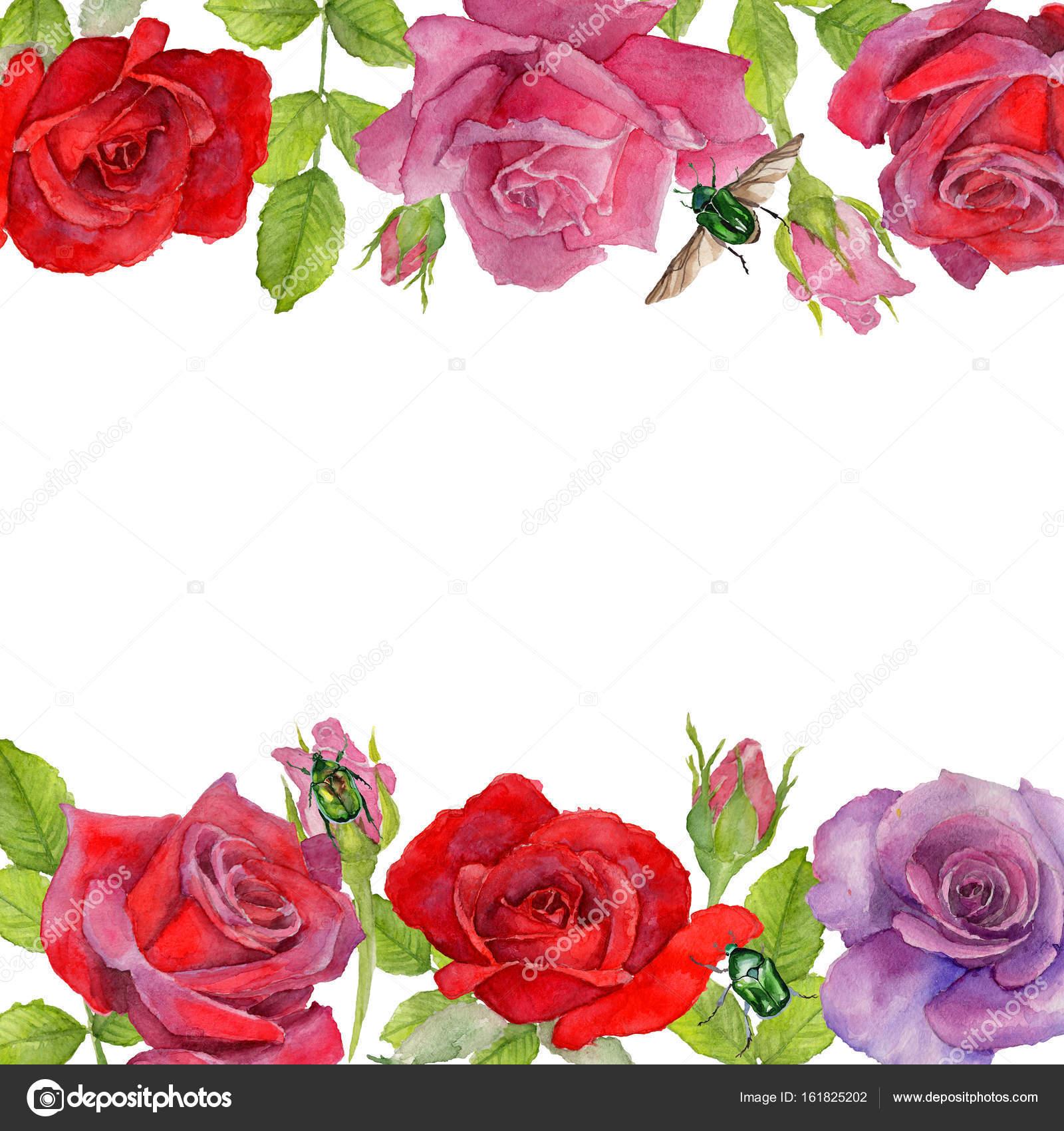 Marco de flor de rosa de flores silvestres en un estilo acuarela ...