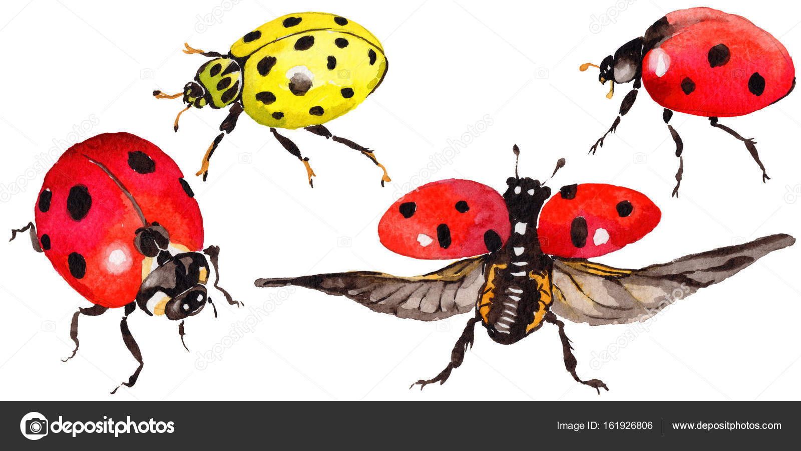 39eefb002a57e Exotic ladybug wild insect in a watercolor style isolated. — Stock Photo