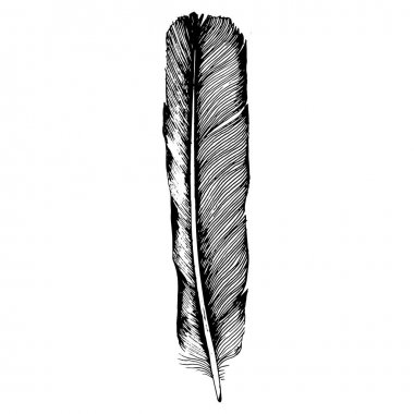 Vector bird feather from wing isolated.