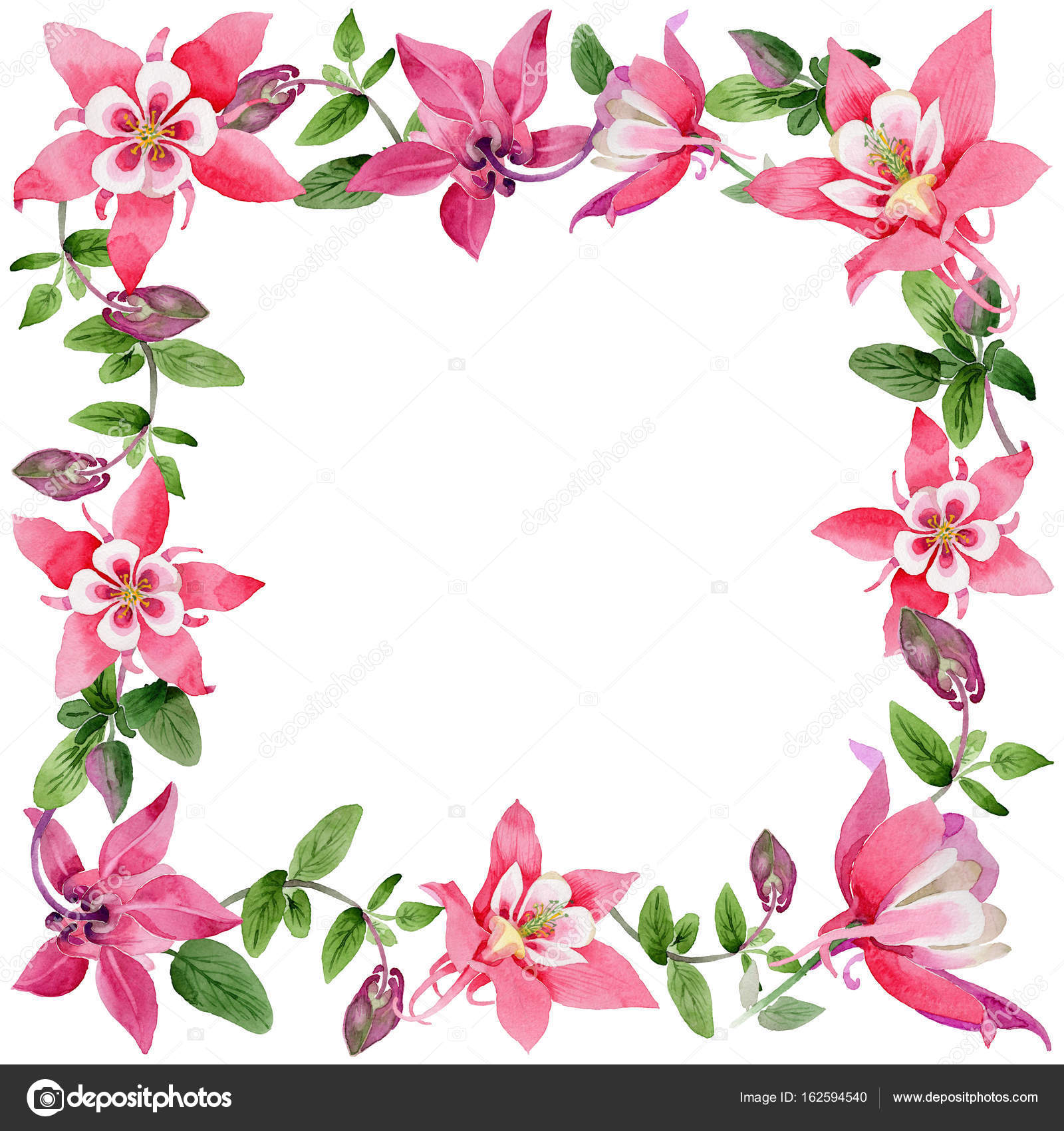 Marco de flor de aquilegia de flores silvestres en un estilo ...
