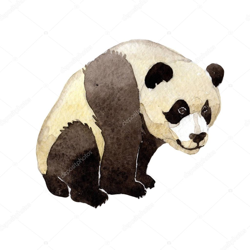 Panda wild animal in a watercolor style isolated.