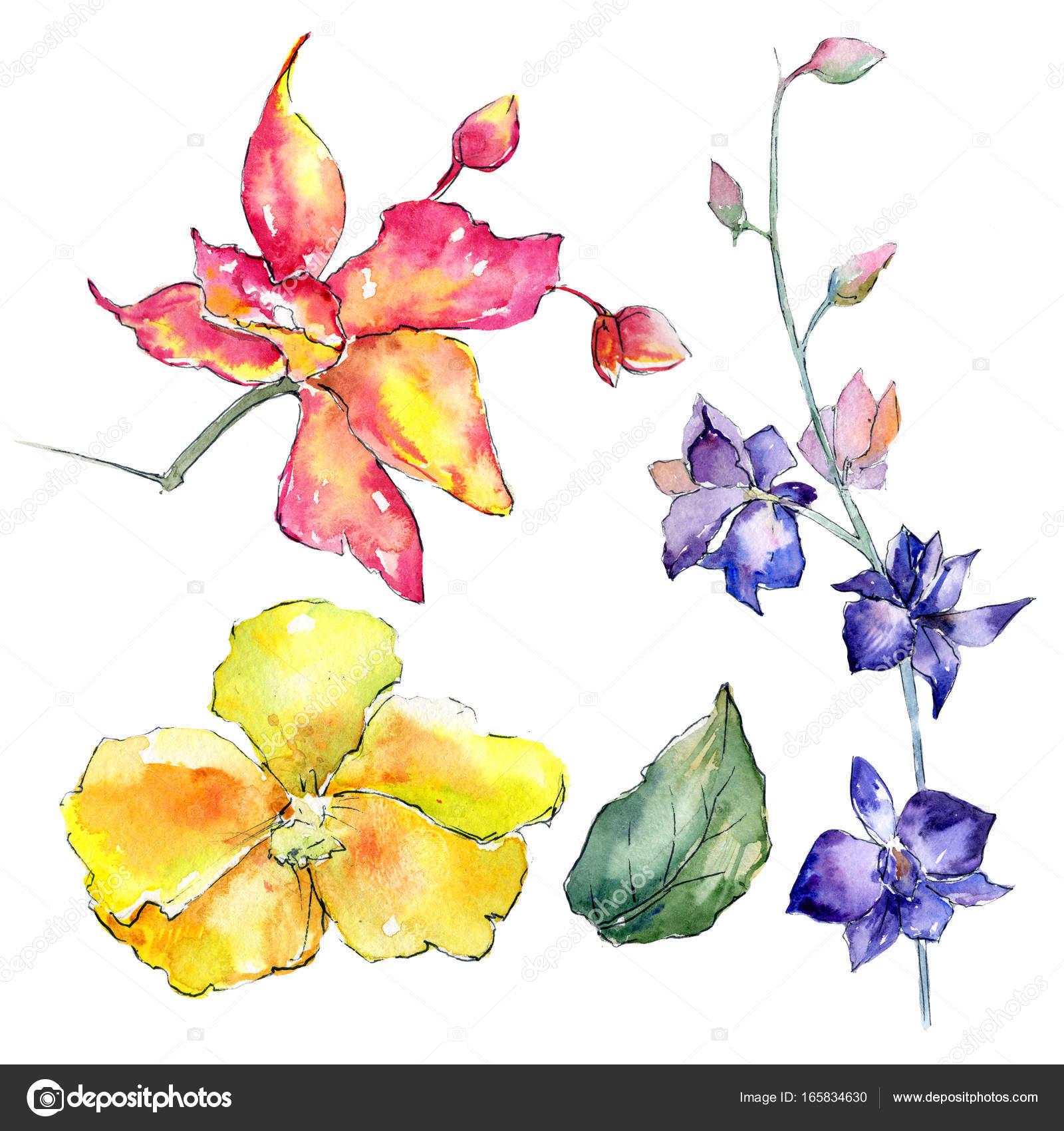 Cattleya Flower Tattoos Wildflower Orchid Flower In A