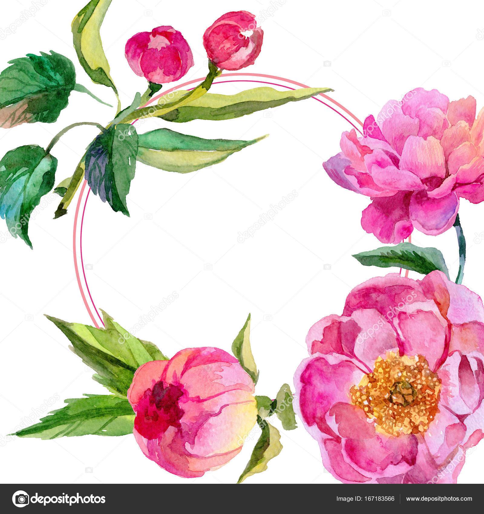 Flores silvestres peonías flor marco un estilo acuarela — Fotos de ...