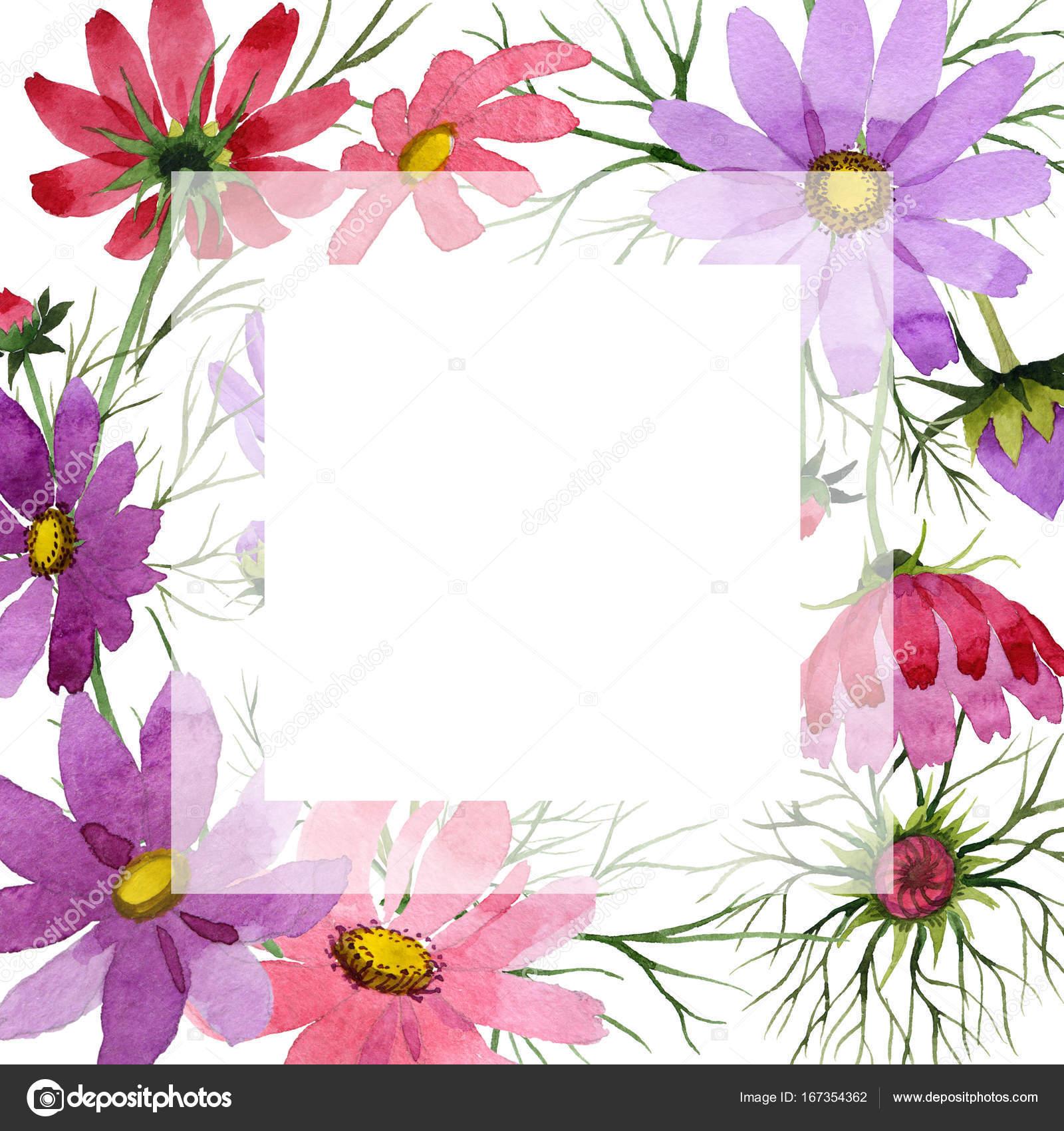 Marco de flores kosmeya de flores silvestres en un estilo acuarela ...