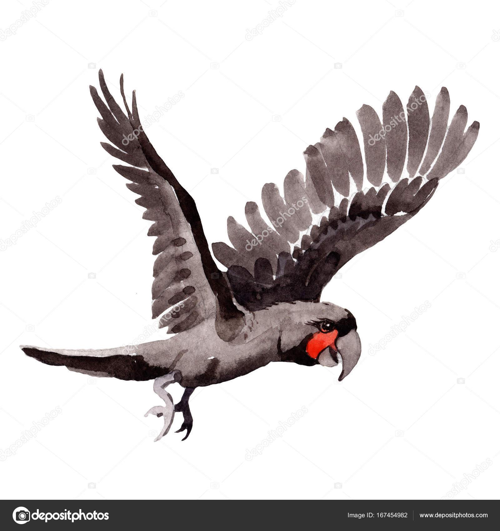 Ara Noir Oiseau Ciel Dans Une Faune De Style Aquarelle Isole