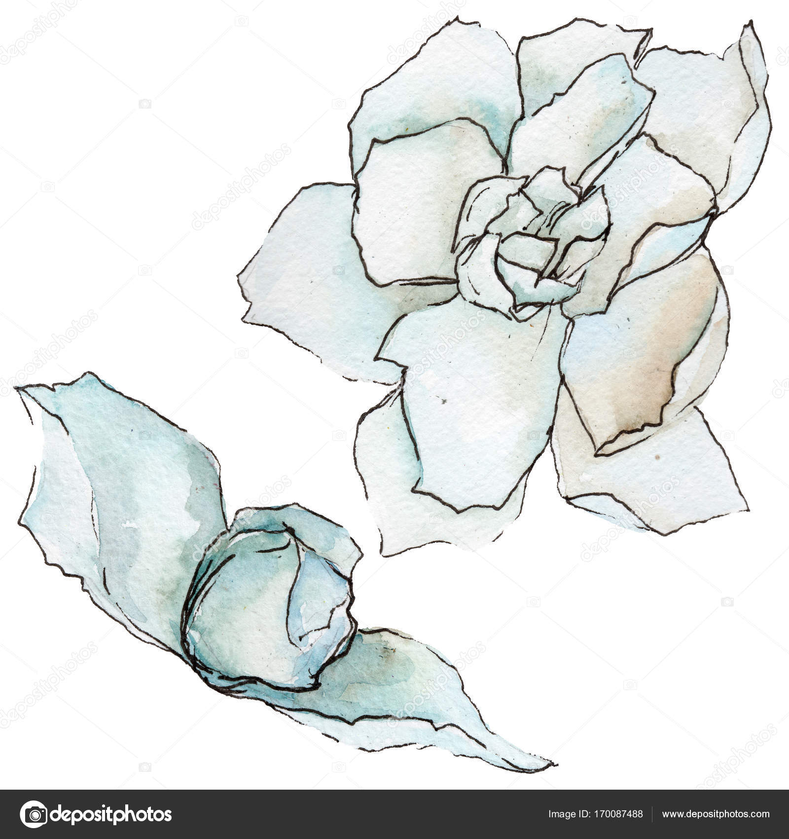Wildflower Gardenia Flower In A Watercolor Style Isolated Stock