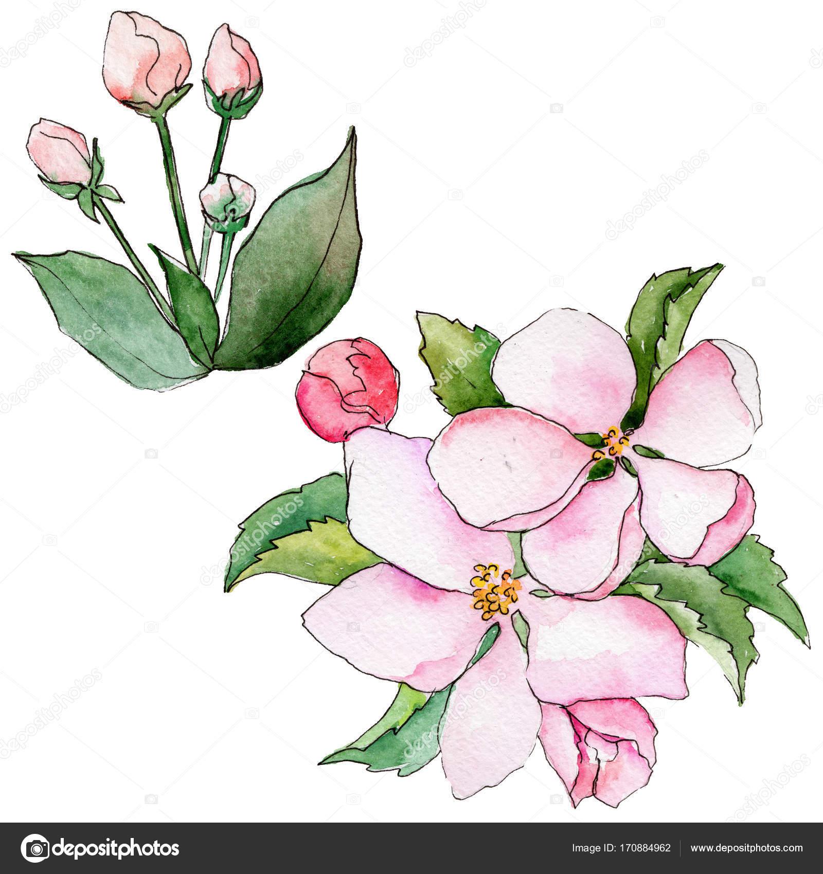 Wildflower Blumen von Apple in einem Aquarell Stil isoliert ...