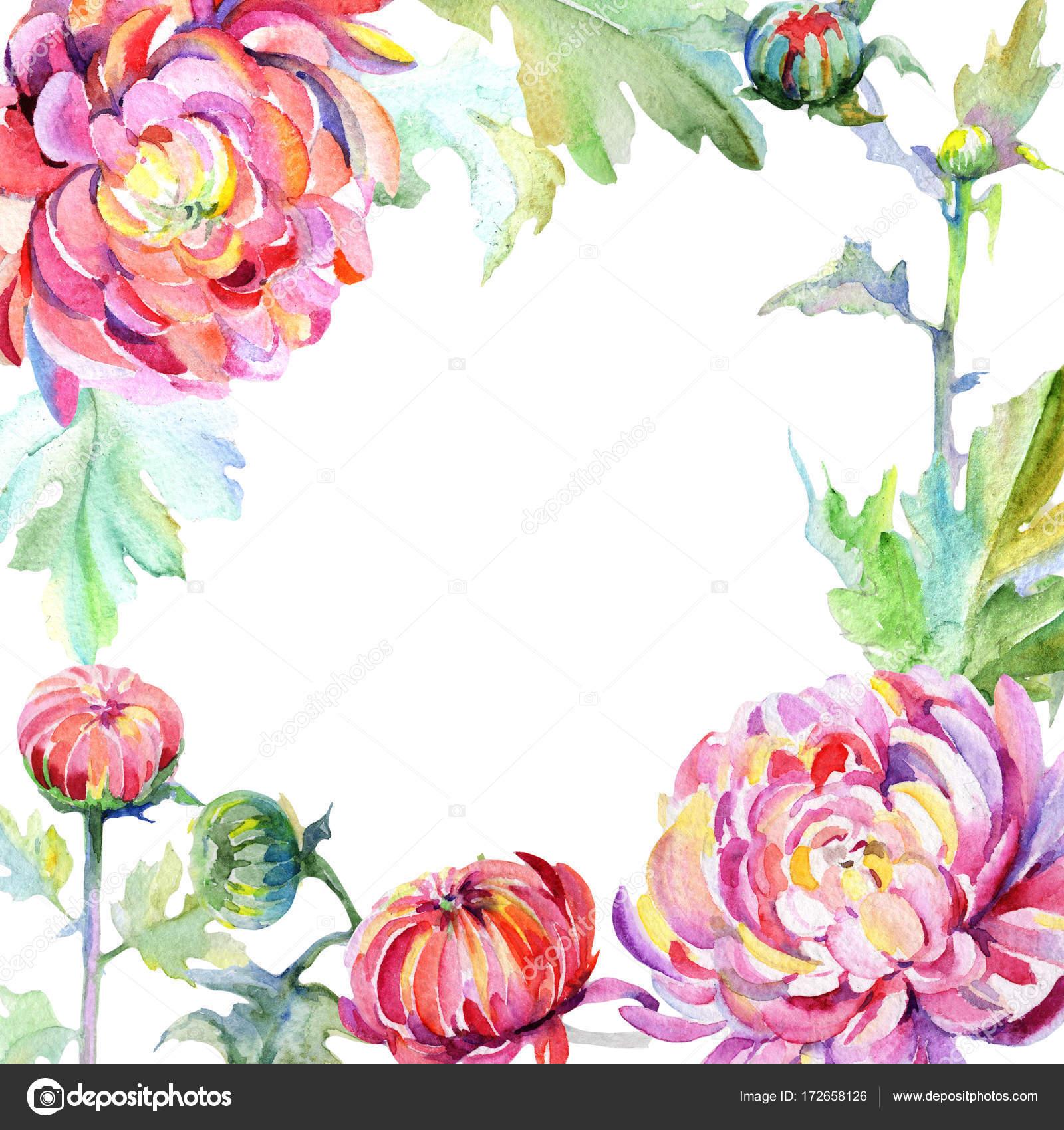 Цветок хризантемы фото