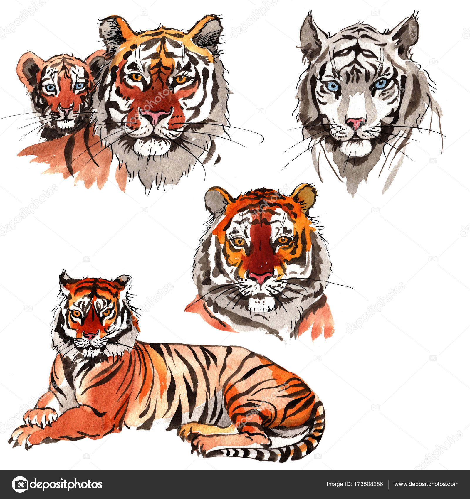 Imágenes Tigres De Bengala Con Frases Tigre Exótico En Un