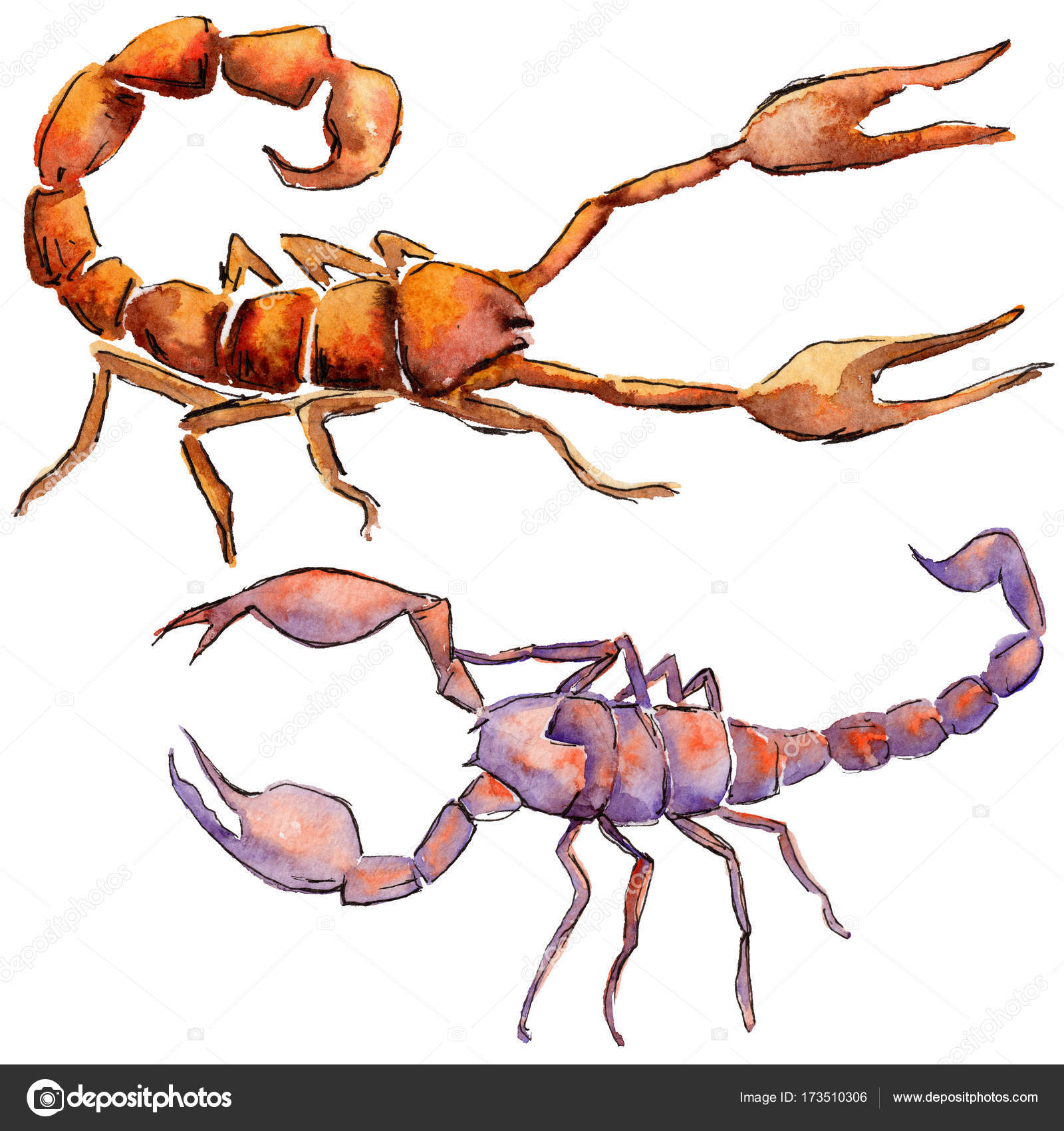 Insectos silvestres exóticas scorpion estilo acuarela aislado — Foto ...