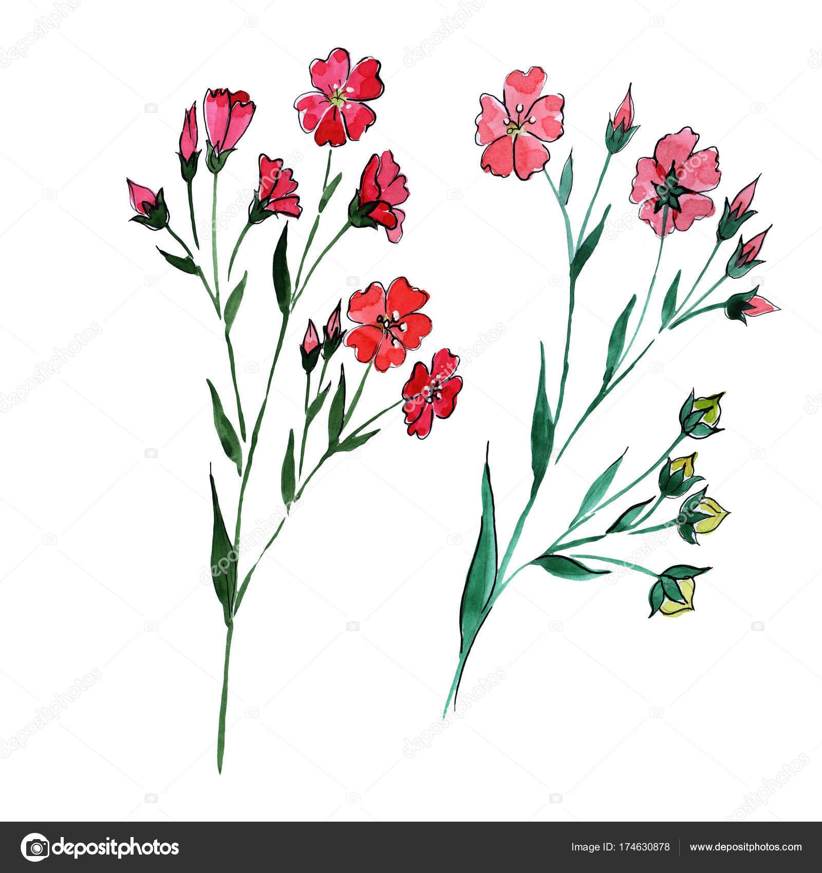 Fleur De Lin Fleurs Sauvages Dans Un Style Aquarelle Isole