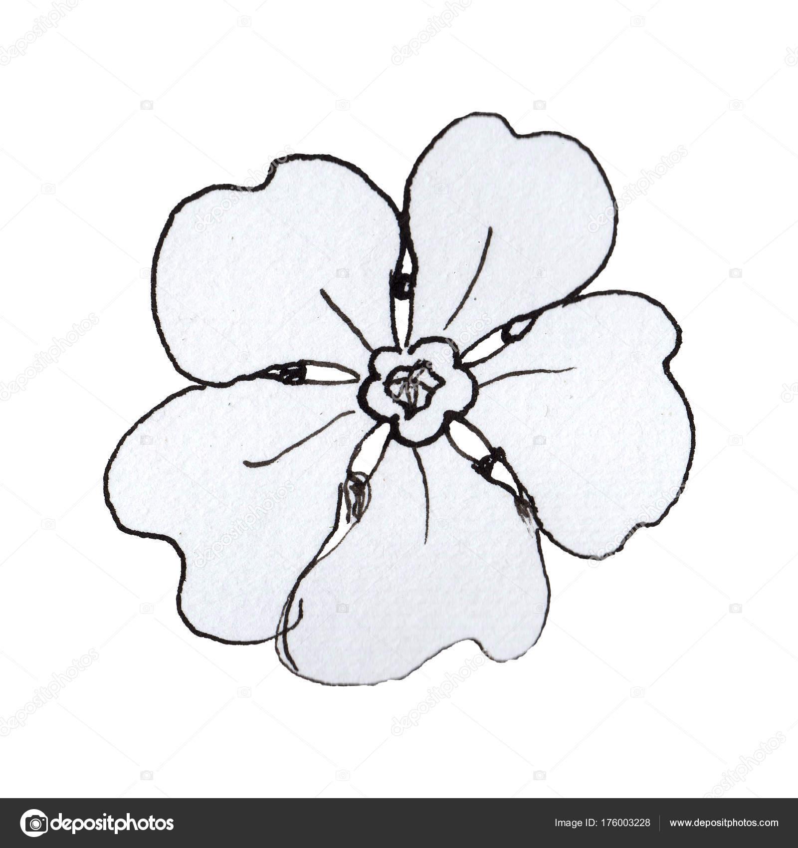 Coloriage Fleur Myosotis.Myosotis De Fleurs Sauvages Dans Un Style Aquarelle Isole