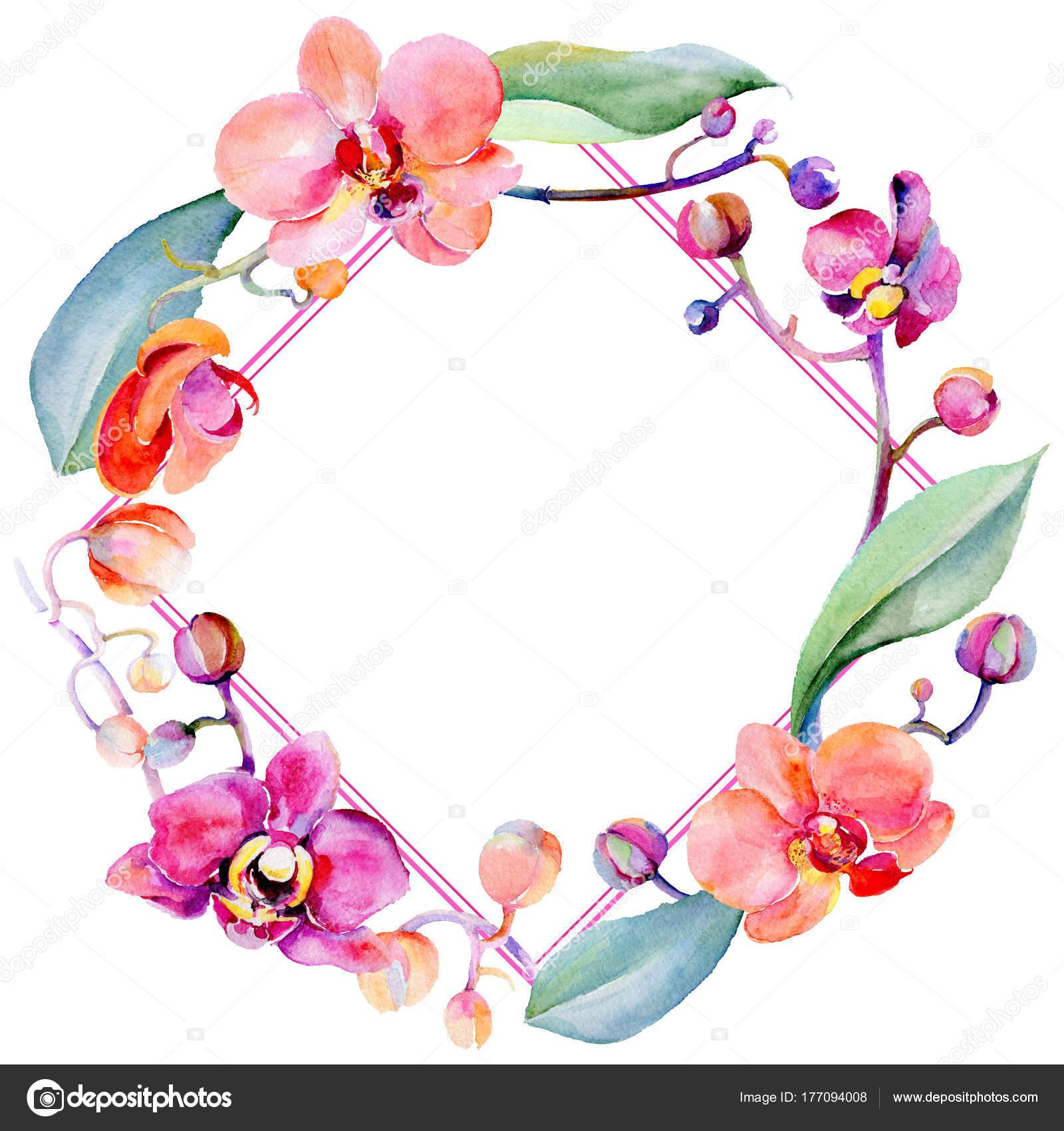 Couronne de fleur d\u0027orchidée fleurs sauvages dans un style Aquarelle\u2013  images de stock libres de droits