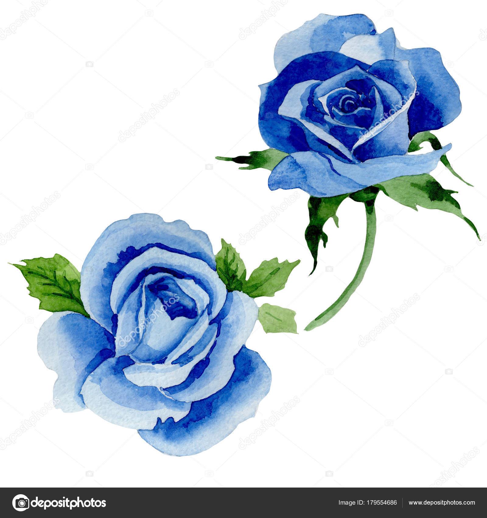 Fleur Rose Bleu Fleurs Sauvages Dans Un Style Aquarelle Isole
