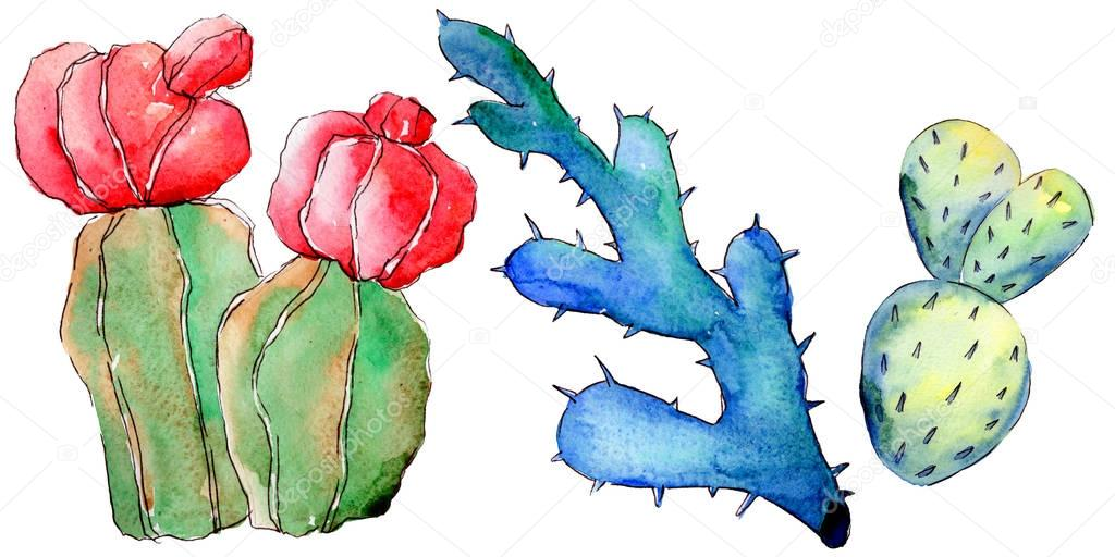 Wildflower cactus in a watercolor style isolated.