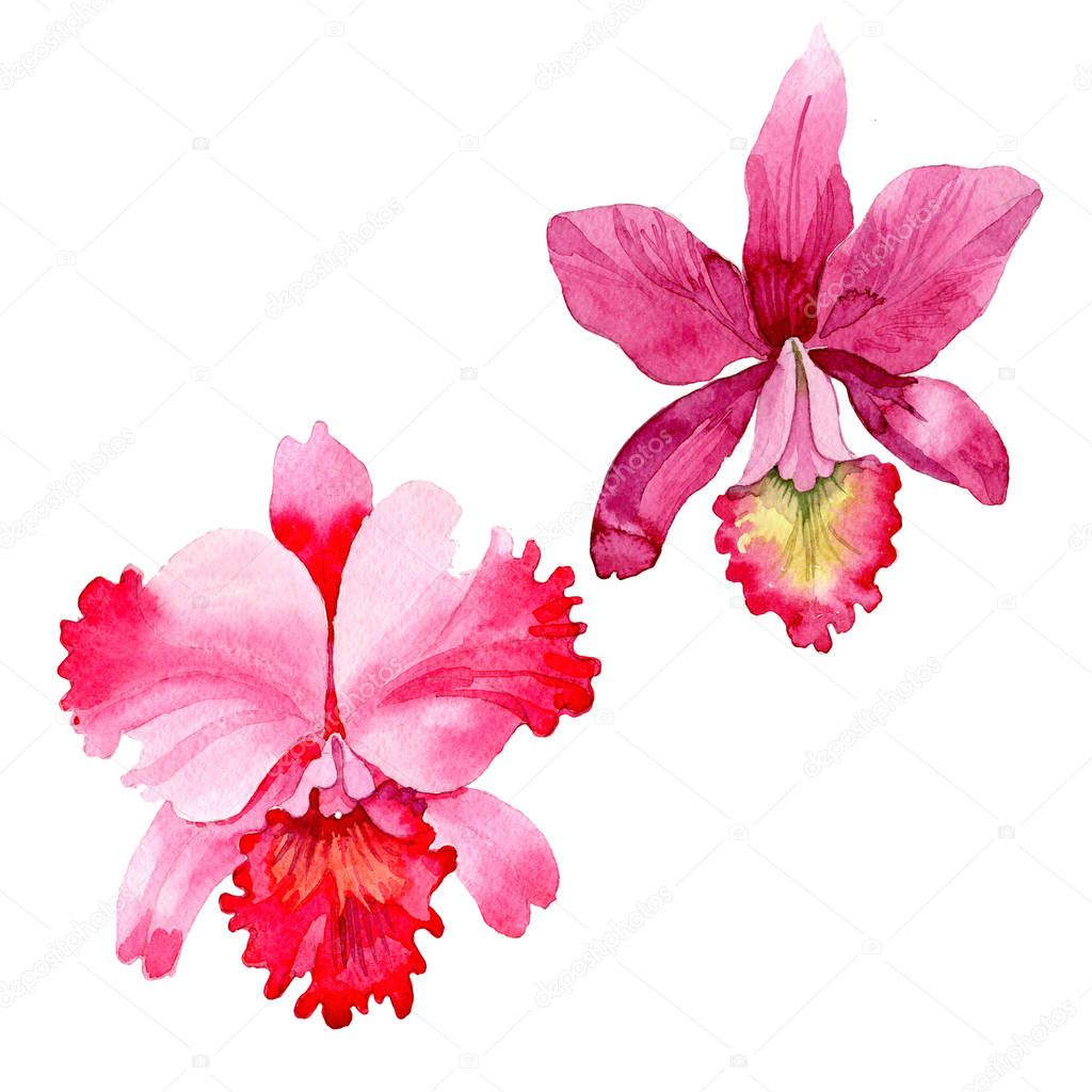 Wildflower pink orchid flower in a watercolor style isolated.