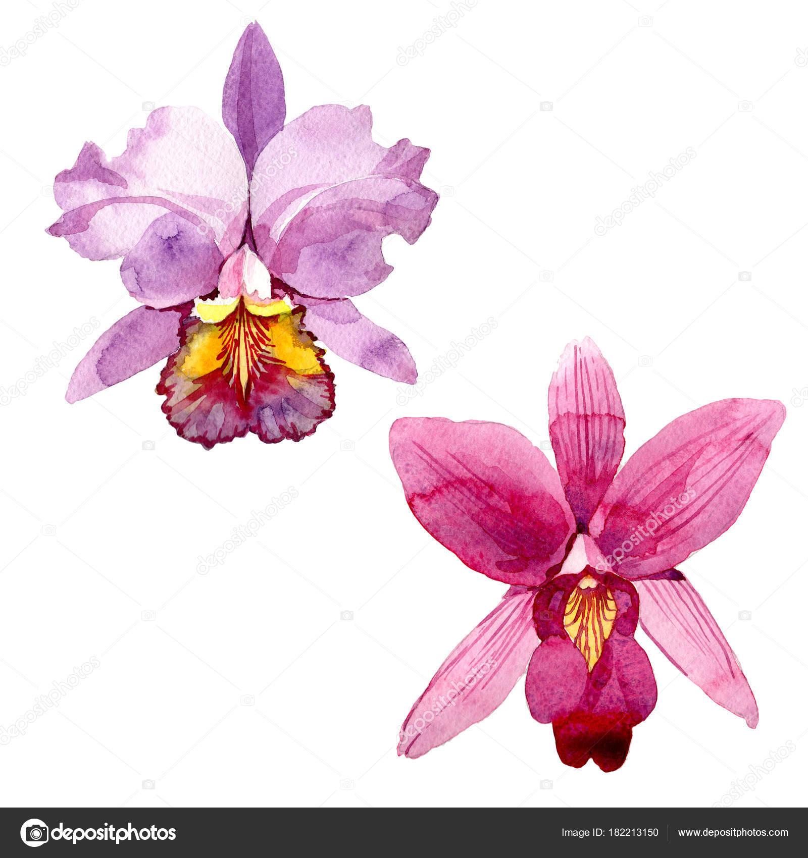 Fleur D Orchidee Rose Fleurs Sauvages Dans Un Style Aquarelle Isole