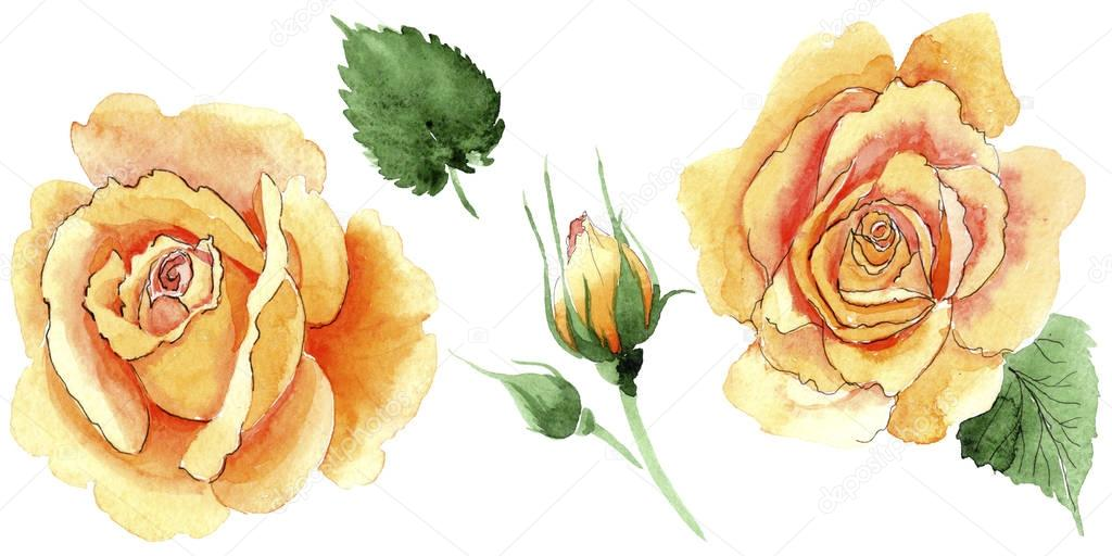 Wildflower yellow tea-hybrid roses flower in a watercolor style isolated.