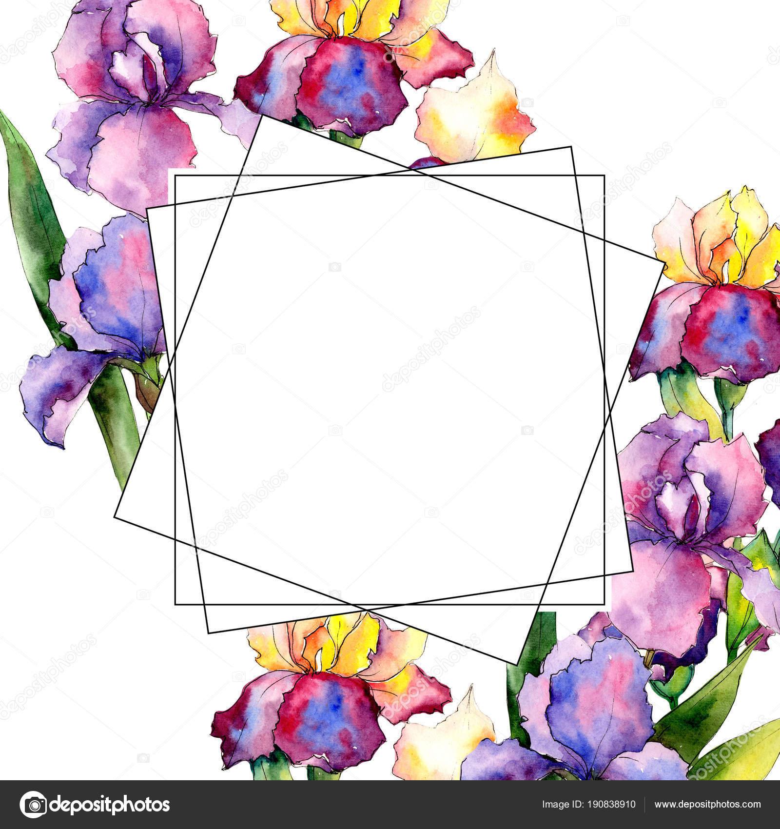 Iris de colores. Flor botánica floral. Marco de flores silvestres de ...