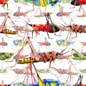 Exotic crickets wild insect in a watercolor style pattern.