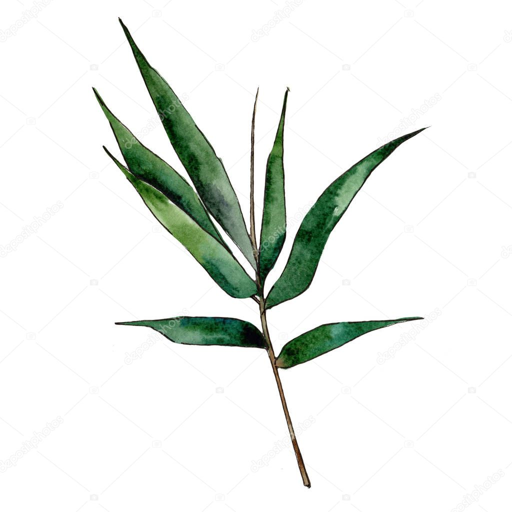 Bamboo tree in a watercolor style isolated.