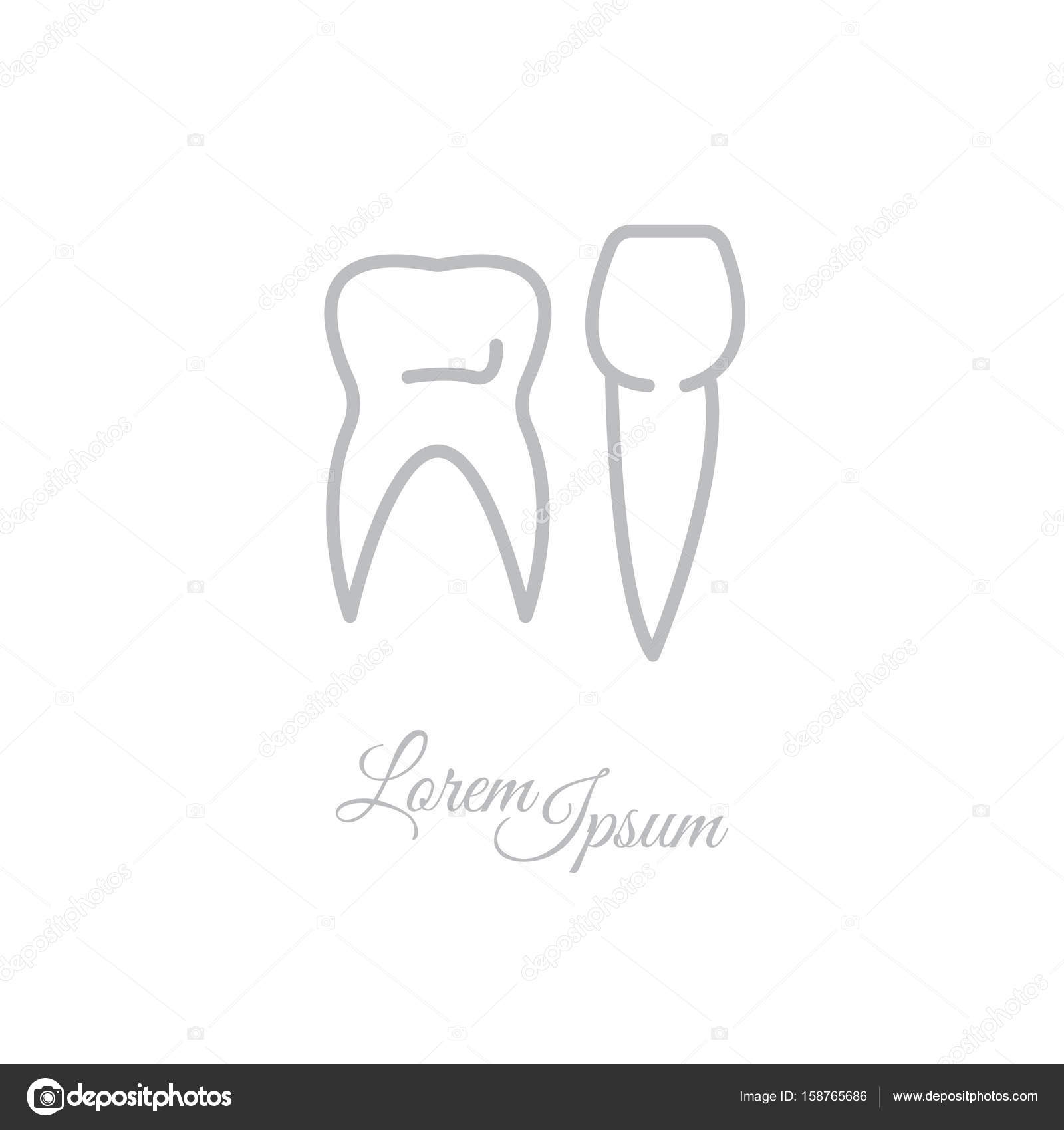 Different Types Of Human Teeth Stock Vector C Ppvector 158765686
