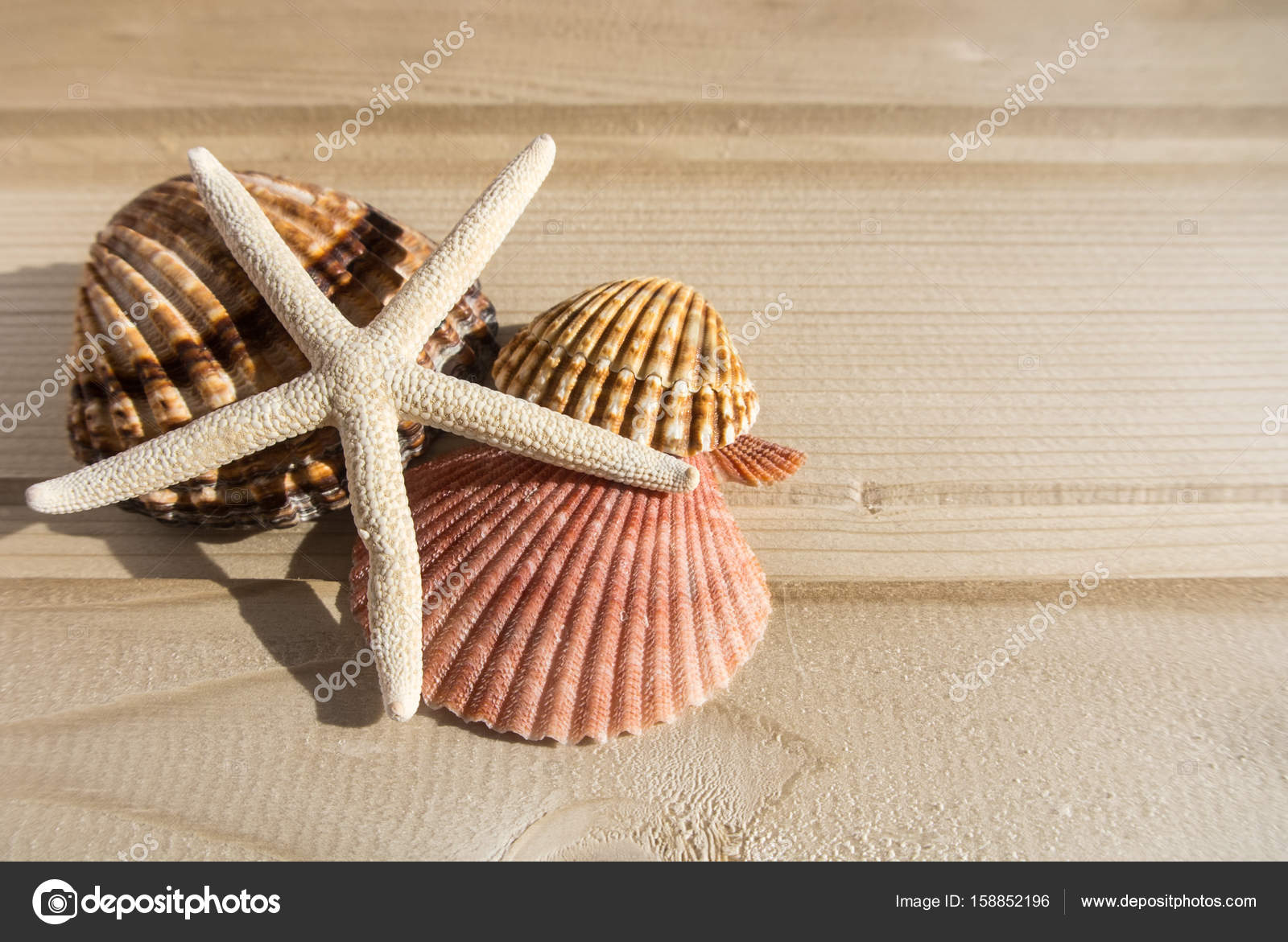 Fondo di legno brillante con una collezione di conchiglie di mare