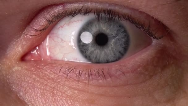 close up of the male eye macro 4K