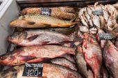 Pesce crudo fresco sul bancone del supermercato. Pesce di fiume